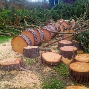 Opskåret træ