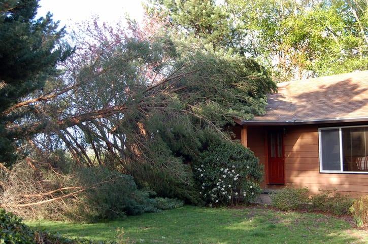 Træ vætet i stormen